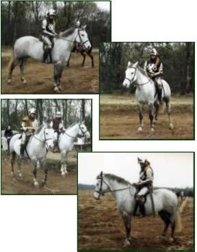 pic_horses01